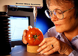 Judith Abbott of the USDA testing the texture of tomatoes (photo by Kieth Weller via link from USDA website)